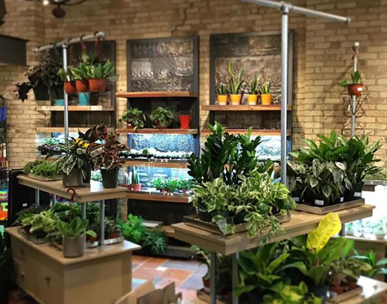 Brick Walls & Plants_web